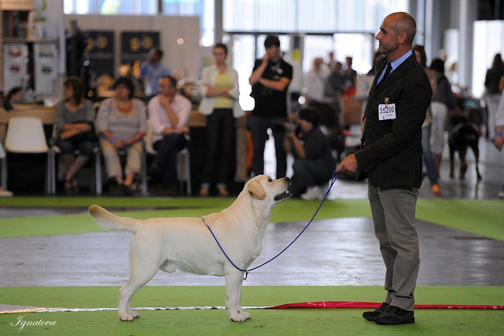 Crufts Dog Show - Страница 7 DSC_0243